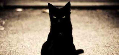 le chat noir porte malheur ou bonheur