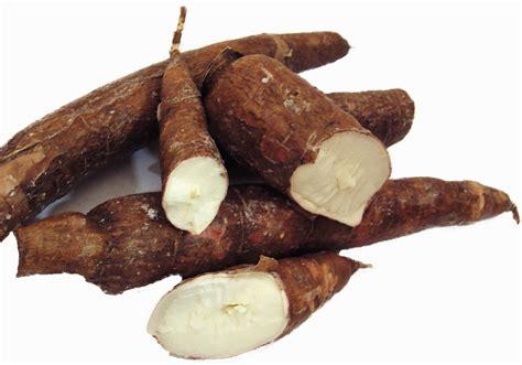 cuisine manioc kappa tapioca maracheeni the layman 39 s root healthyliving