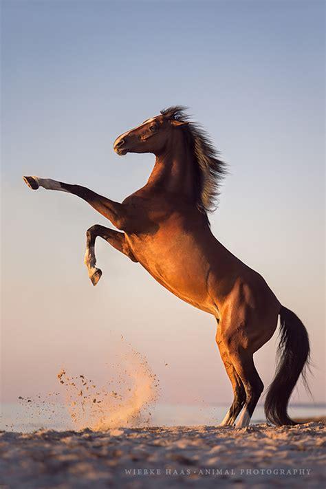 Pferdefotografiewarmblutpferdestrandpferdefotografie