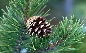 Life In The Taiga : nchsapes boreal forest 4 ~ Frokenaadalensverden.com Haus und Dekorationen