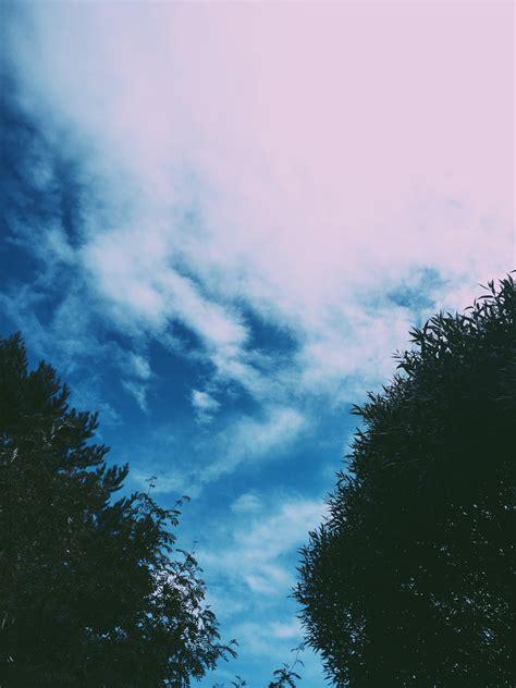 sky nature tree aesthetic tumblr freetoedit