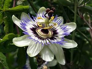 Blumen Im Juli : exotische blumen kostenlose bilder ~ Lizthompson.info Haus und Dekorationen