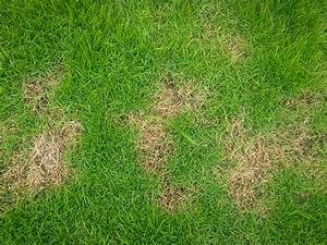 Rasenwalze Selber Bauen : surprising ways to get rid of insects in your lawn the ~ Lizthompson.info Haus und Dekorationen