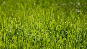 Frisch Gesäten Rasen Düngen : rasensamen test tipps zum kaufen von rasensamen plantura ~ Watch28wear.com Haus und Dekorationen