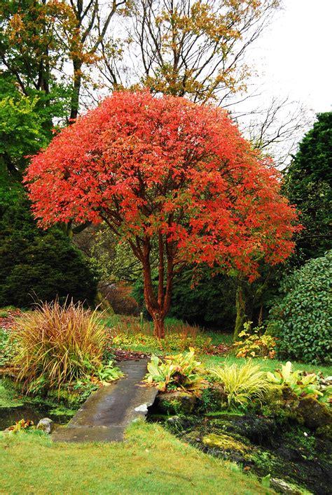 Autumn - Holehird