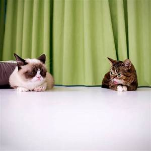 So This Happened: Grumpy Cat Meets Lil Bub | Daily of the Day