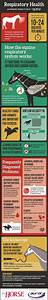 Horse Teeth Age Chart