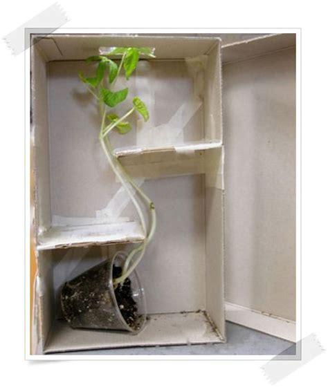 3 experimentos infantiles con plantas   Pequeocio
