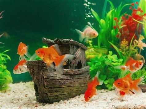 Decorating Ideas For Fish Tank by 10 Fish Tank Decoration Ideas Diy My Fish