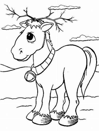 Coloring Pages Realistic Animal Animals Tweet