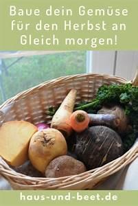 Gemüse Anbauen Plan : baue dein gem se an gleich morgen gem se anbauen ~ Watch28wear.com Haus und Dekorationen