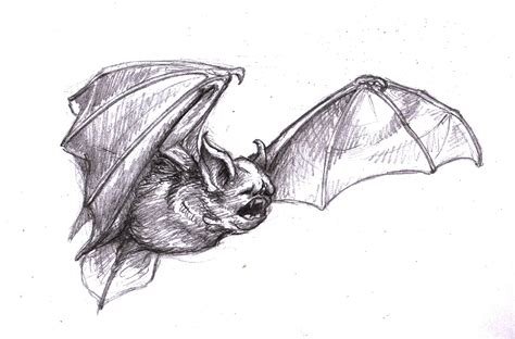 Scary Halloween Witch Coloring Pages by Magellin Blog Vampire Bat Sketch