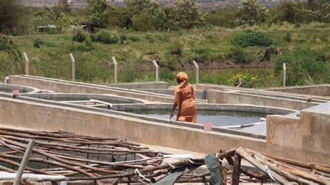 feasibility study fish farming methods  kenya
