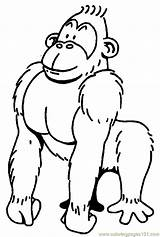 Gorilla Coloring Pages Printable Cartoon Clipart Coloringpages101 Monkeys Getcoloringpages Mountain sketch template