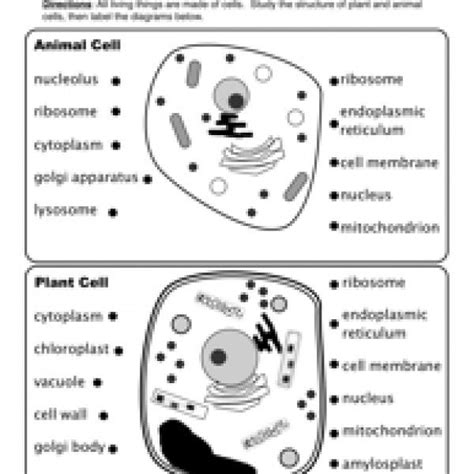 animal and plant cells worksheet plant cell worksheets