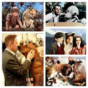 Tissue Alert: Must-See Sad and Silly Dog Movies for ...