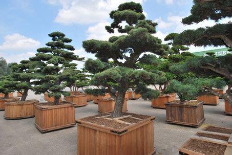 Gartenbonsaipflege Bonsai Shop  Pflanzendiscount Schweiz