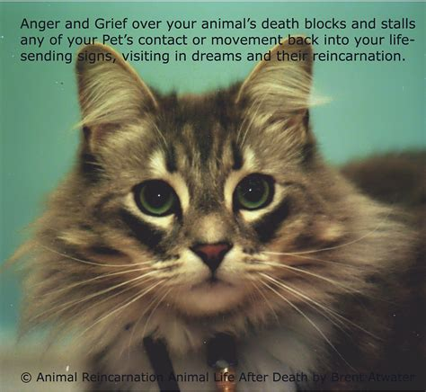 animal grieving quotes quotesgram