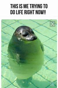 Treading Water  Keeping Head Above Water  Me Trying To Do Life Right Now
