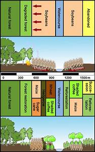Intensive Farming With A Climate Woodland Mix Increases Yields