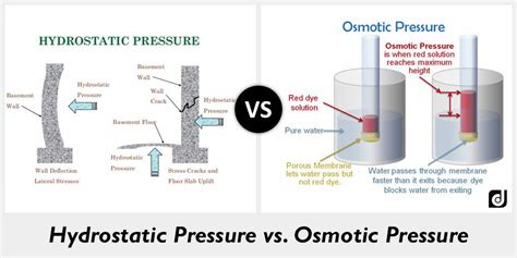 Difference Between Hydrostatic Pressure And Osmotic Pressure