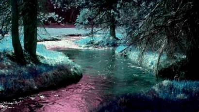 Forest Psychedelic Fun Moon River Trippy Acid