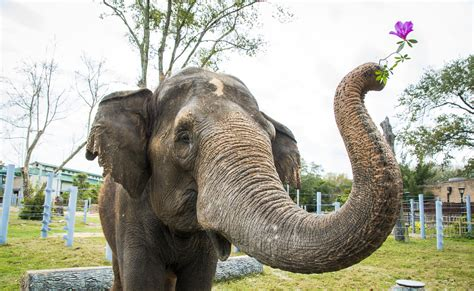 zoo sprouts enormous elephants   months