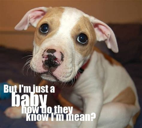 144 Best Dog Quotes Images On Pinterest  Doggies, Animal. Country Quotes Missing Someone. Love Quotes One Liners. Beautiful Quotes Christmas. Thank You Quotes Images. Faith Quotes Oswald Chambers. Sister Quotes Or Poems. Quotes About Needing Change In A Relationship. Quotes About Moving On In Education