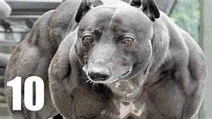 World Strongest Dog Ever | www.pixshark.com - Images ...