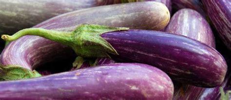 cuisiner une ratatouille recettes d 39 aubergines idées de recettes à base d 39 aubergines