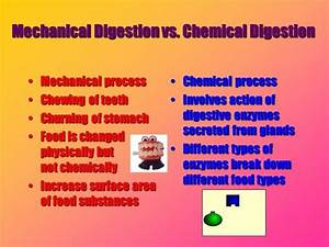Venn Diagram Of Chemical And Mechanical Disgestion