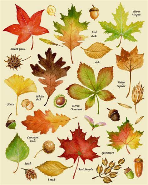 Autumn Leaves Print Etsy