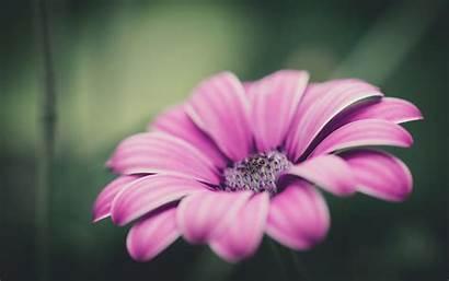 Nice Flowers Desktop Weneedfun Backgrounds Agenda Screensavers
