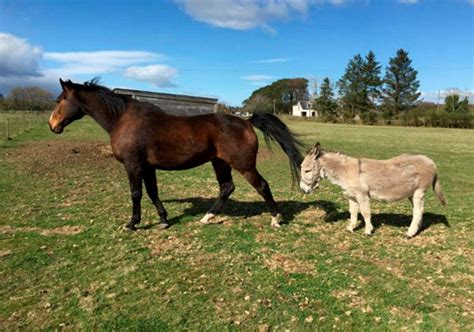 donkey horse friends animal together inseparable rescue centre tully press rehomed spca couple eric story aberdeen duo swns scottish stories