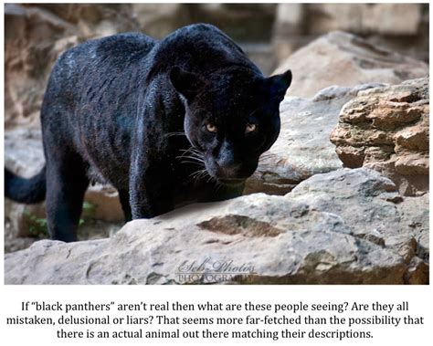 It is not affiliated with marvel entertainment, llc and is an unofficial community operated by. Texas Cryptid Hunter: The Latest Black Panther Sighting Reports