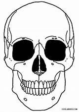 Skeleton Coloring Pages Head Printable Drawing Anatomy Cool2bkids Pirate Dog Getdrawings sketch template