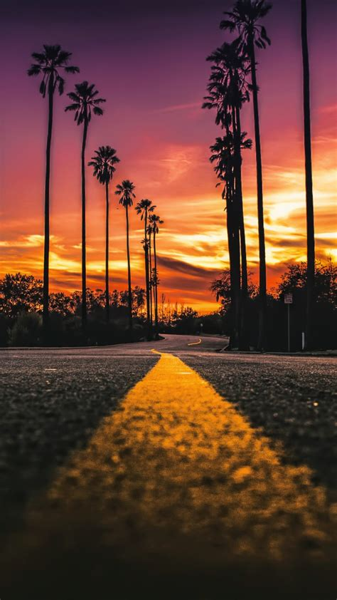 stock images los angeles california road palms sunset  stock images