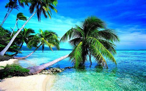 Tropical Beach Palm Sky View Wallpaper