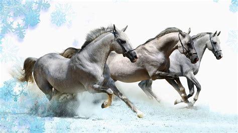 Running Horses Wallpaper (63+ Images