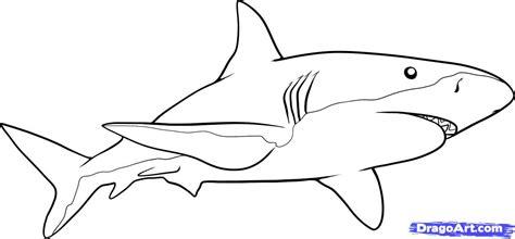 draw  shark step  step fish animals