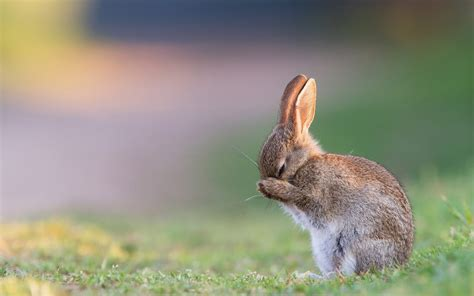 cute rabbit hdp wallpaper latestwallpaper