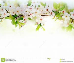 White Spring Flowers On A Tree Branch Stock Image - Image ...