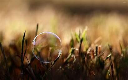 Soap Bubble Grass Bubbles Macro Depth Field
