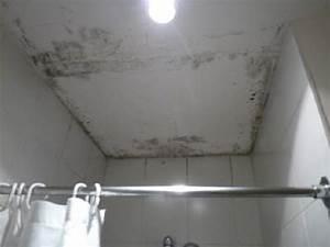 Schwarzer Schimmel Wand : schwarzer schimmel im bad fetter schwarzer schimmel im bad hotel grand zaman beach auf ~ Whattoseeinmadrid.com Haus und Dekorationen