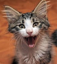 Funny Cat with Mouth Open