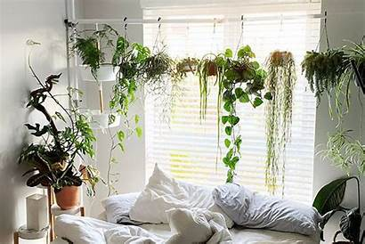 Plants Hanging Indoor Hang Bhg Without Better