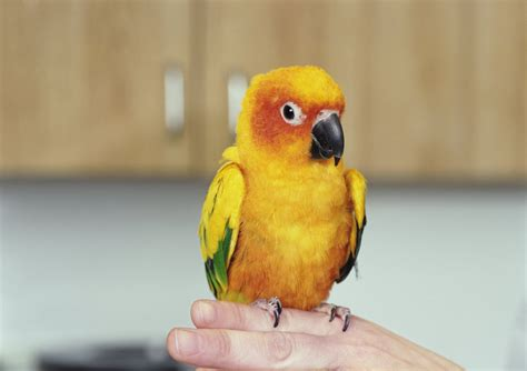 finches as pets 28 best birds as pets 10 most colorful and prettiest pet birds in the world xcitefun net