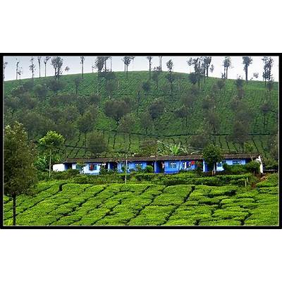 `Valparai' (houses of estate workers) a photo from Tamil