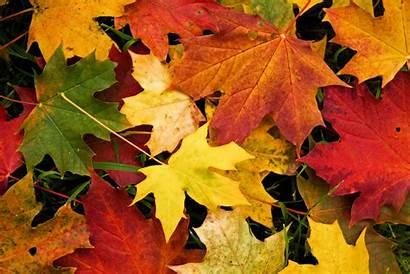 Leaves Autumn Fall Autum Autumm Autumnal Wallpapers