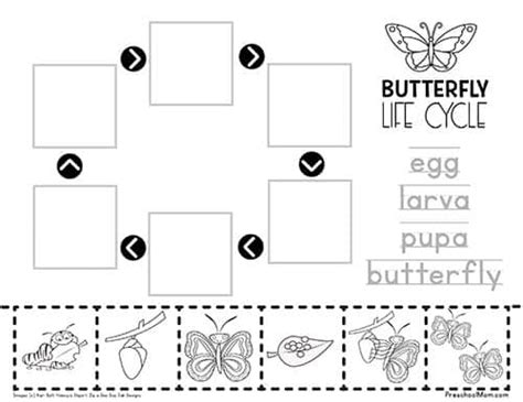 cycle of a butterfly worksheet preschool 912 | ButterflyLifeCycleWorksheet
